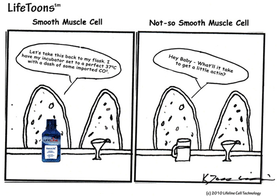 Why Some Smooth Muscle Cells Out Perform Others