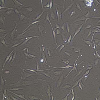 FC-0023 Neonatal Melanocyte, 20X