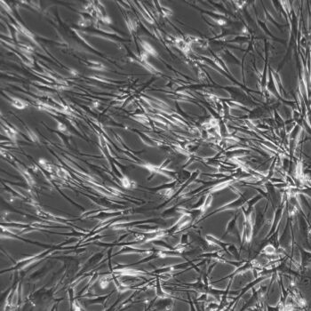 Lung Smooth Muscle Cells 10x FC-0046