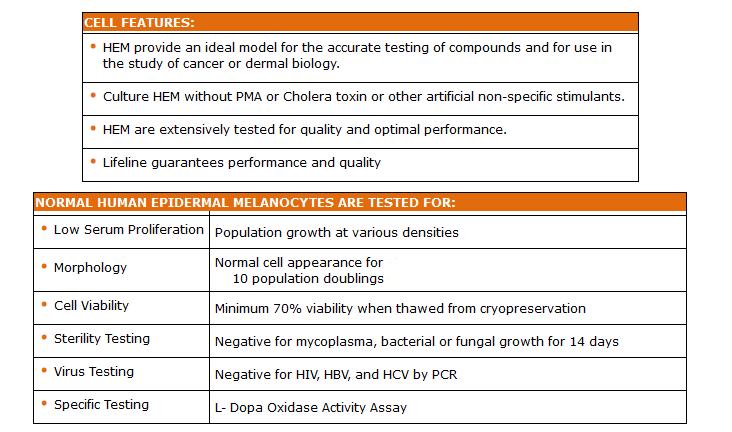 epidermal melanocytes adult quality