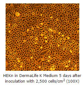 keratinocytes culture