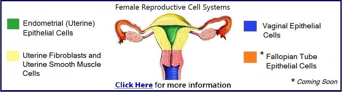 female reproductive cells research uses, Muscles