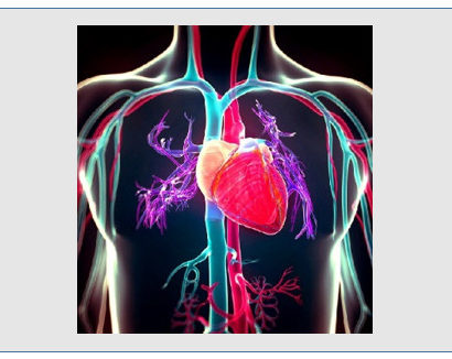 endothelial cells and cardiovascular disease