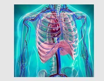 cardiovascular endothelial cells
