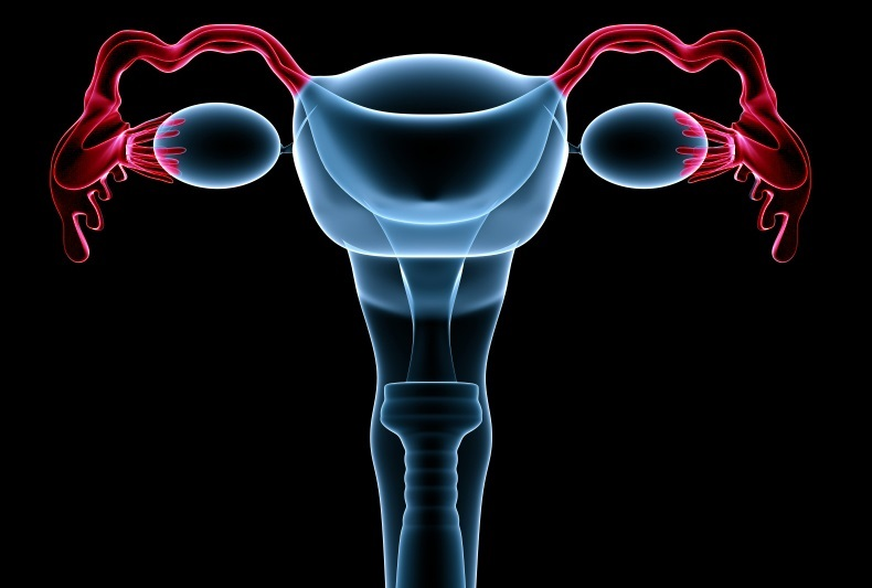 Lifeline Cell Technology Adds Fallopian Tube Epithelial Cells To