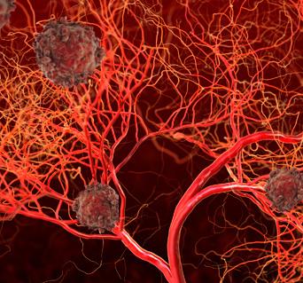 Antiangiogenesis Blood Vessels