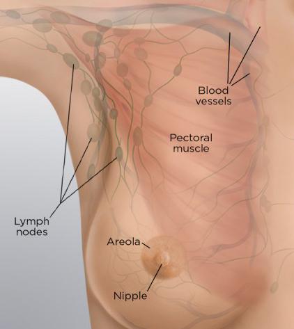 breast blood flow image blog